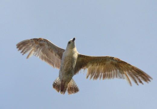 kinsale_bird